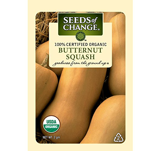 Butternut Winter Squash - 1