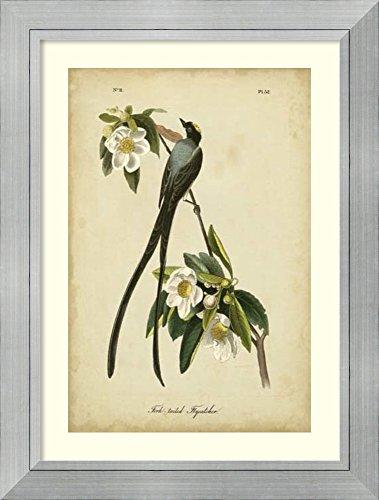 Fork Audubon John James (Framed Art Print 'Audubon Fork-tailed Flycatcher' by John James Audubon)