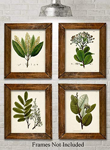 Green Botanical Illustrations - Set of Four Prints (8x10) Unframed - Great Kitchen Decor and Gift for Nature Lovers