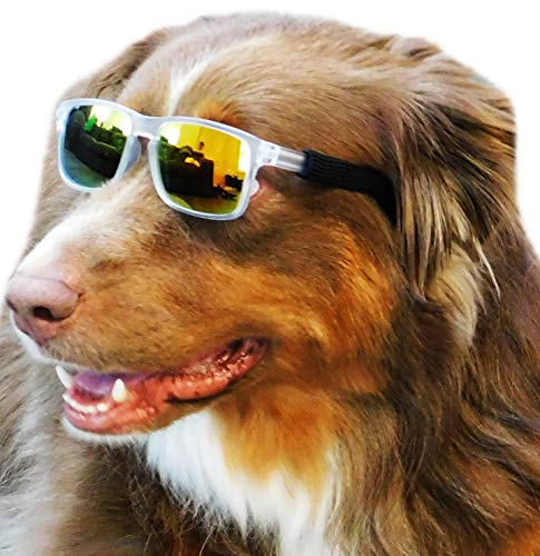 G013 Pet Dog Square Sports Sunglasses Goggles w retainer strap for medium breeds 20-55lbs (Sports Frost clear-gold mirror)