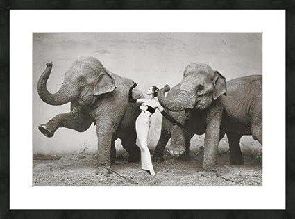"Dovima con elefantes "" 1955 Richard Avedon Barette/Set de moldes para luz escamoteable"