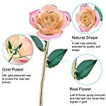 ZJchao-Pink-White-Gold-Rose-Gold-Rose-Love-Forever-Long-Stem-24k-Gold-Dipped-Rose-Gifts-for-Her-White-Pink