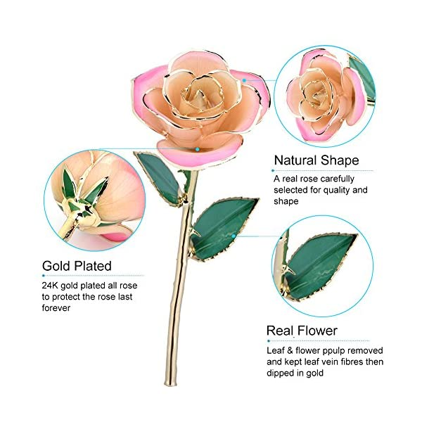 zjchao Pink White Gold Rose, Gold Rose Love Forever Long Stem 24k Gold Dipped Rose, Gifts for Her (White-Pink)
