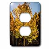 3dRose Danita Delimont - Forests - USA, Colorado, Rocky Mountain National Park. Sunburst on aspen tree. - Light Switch Covers - 2 plug outlet cover (lsp_278722_6)