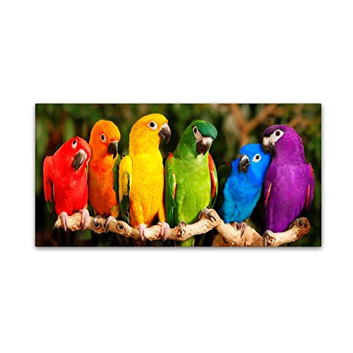 - Rainbow Parrots by Mike Jones Photo, 16x32-Inch Canvas Wall Art