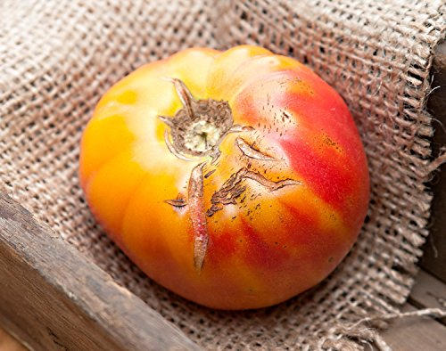 Old German Heirloom Tomato Premium Seed Packet ()