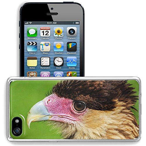 MSD Apple iPhone 5/iPhone 5S/iPhone SE Clear case Soft TPU Rubber Silicone Bumper Snap Cases iPhone5/5S IMAGE 34846340 ll close up head portrait of a crested cara cara showing detail in feathers beak (Beak Care)