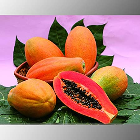 Amazon.com : (PapayaAmbizu Heirloom Yellow Red Pawpaw Papaya Fruit ...