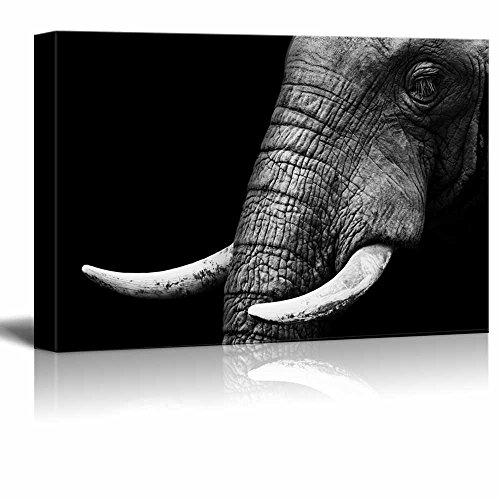 wall26 – Canvas Prints Wall Art – Close Up Elephanic Head on Black Background Modern Wall Decor Home Decoration Stretched Gallery Canvas Wrap Giclee Print. Ready to Hang – 32 x 48