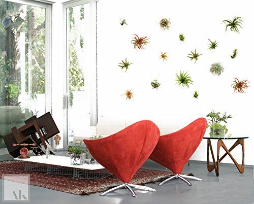 Set of 3 Air Plants Hanging Planters | Tillandsia Air Plant Holder | Vertical Garden | Live Plants Terrarium Wall Planter Plant Hanger | Living Wall Mount Indoor Planter | Air Plants Included ArtAK S