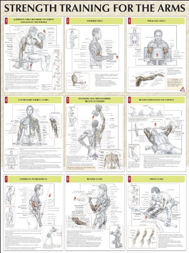 Strength Training for the Arms Poster: Frederic Delavier ...