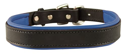 Perri's Padded Leather Dog Collar, Black/Blue, Medium