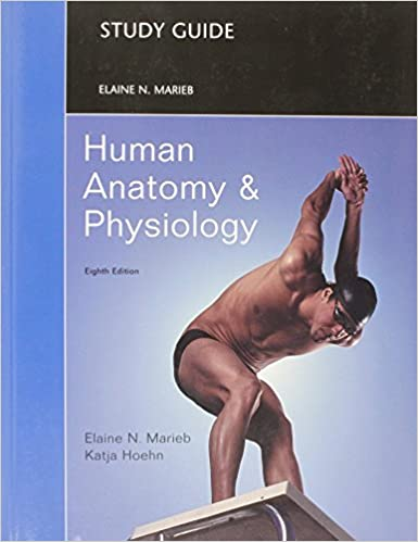 Amazon.com: Study Guide for Human Anatomy and Physiology ...