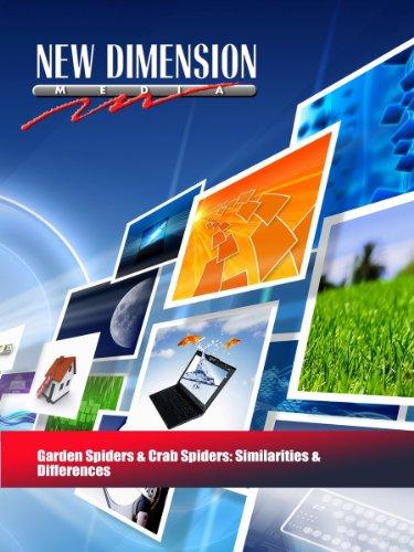 Garden Spiders & Crab Spiders: Similarities & Differences (Camouflage Garden)