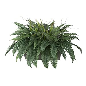 House of Silk Flowers Artificial Fern in Grey-Washed Wood Ledge 1