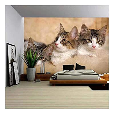Made With Top Quality, Dazzling Object of Art, Three Kittens Lying Beside