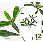 Twelve-27-Rhododendron-Artificial-Sprays-Bendable-Stems