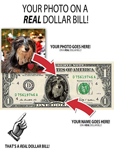 5 Real Dollar Bills Personalized with Your Photo and Name Custom Birthday/Pet Gift/Baby Birth/Christmas (Classic Dollar Bill Green)