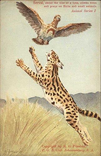 Serval After Bird Other Animals Original Vintage Postcard from CardCow Vintage Postcards