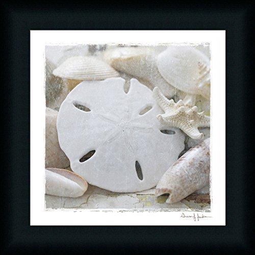Sanibel-IV-Susan-Jackson-Sand-Dollar-Seashells-Framed-Print-Wall-Art-Decor-Picture