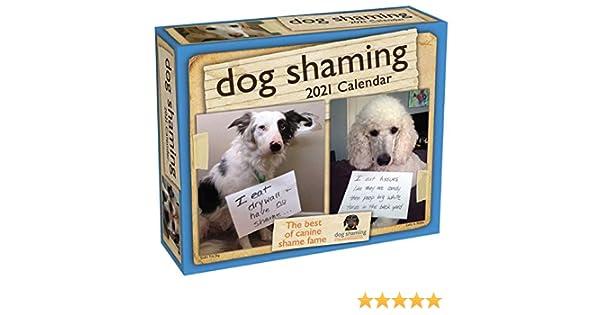 Best Dog Toys 2021 Dog Shaming 2021 Day to Day Calendar: Lemire, Pascale, dogshaming