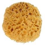 Natural Sea Sponge, Amazing Natural Renewable