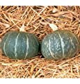 David's Garden Seeds Squash Winter Cha-Cha D2187GP (Green) 25 Hybrid Seeds
