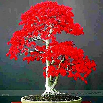 Bonsai Tree Red Deer Bonsai Tree