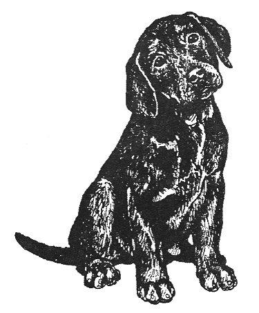 Black Lab Rubber Stamp - Labrador Retriever-5E (Size: 1-1/2