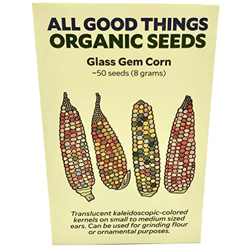 (Glass Gem Corn Seeds (~50) by All Good Things Organic Seeds: Certified Organic, Non-GMO, Heirloom, Open Pollinated Seeds from The United States)