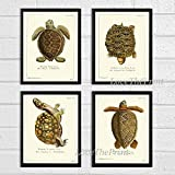 Turtle Art Print SET of 4 Beautiful Antique Turtles Tortoise Reptile Desert Nature Natural Science Illustration Room Wall Home Interior Decor to Frame Unframed GNT