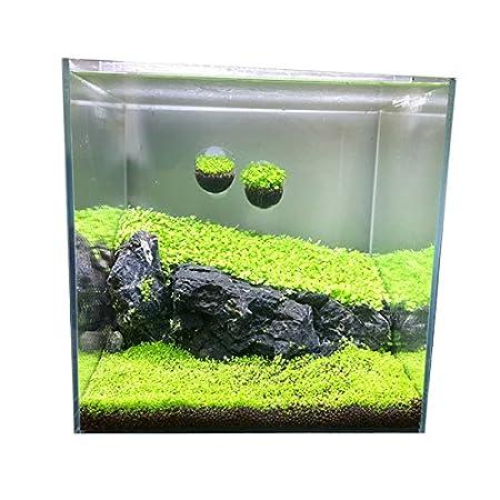 LEEBA Plantas de Acuario Semillas Fácil Acuático Crecimiento Vivo Plantas Peces Decoración Anterior (10 g/Paquete)