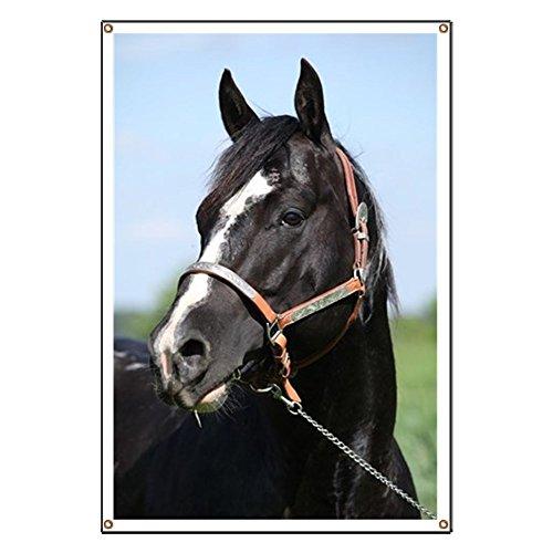 - CafePress Paint Horse Stallion with Western Halter On Vinyl Banner, 44
