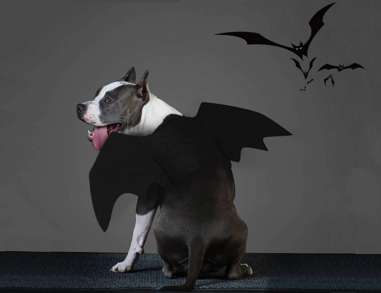 M ALIOO Pet Bat Wings Dog Cat Christmas Adorable Costume Xmas Gift