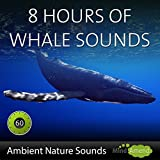 Deep Water Whale Sounds