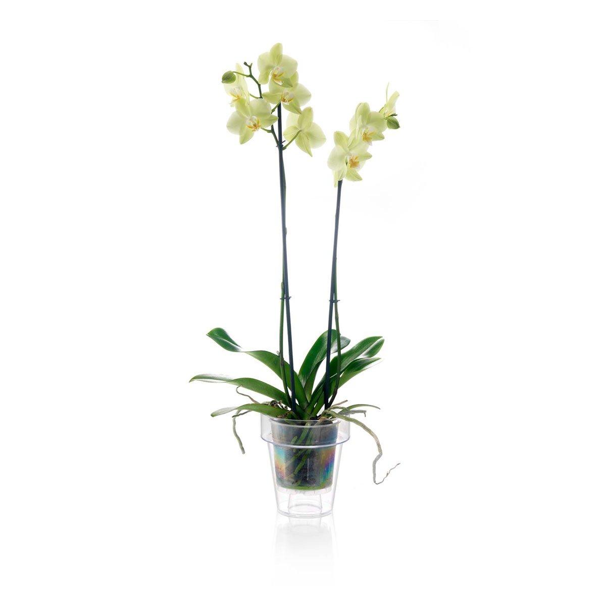 Sencillo vaso transparente para orquidea con soporte y bajo vaso.