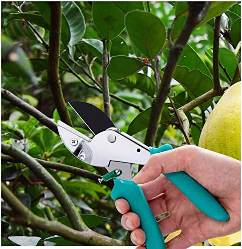 TNNT Pruning Shears Clippers Hedge Shears Branch Shears Small Hand Scissors Garden Scissors High Performance One-Hand Curved Durable Lightweight And Portable-Guillotine