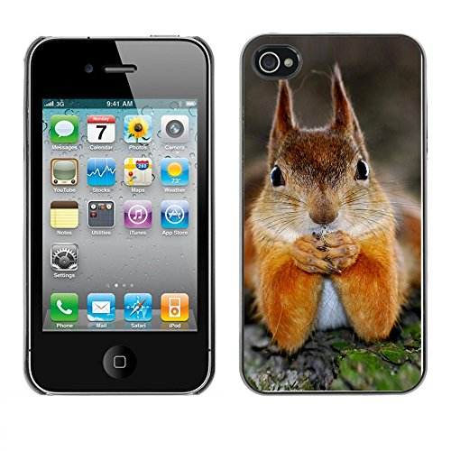 Omega Case PC Polycarbonate Cas Coque Drapeau - Apple iPhone 4 / 4S ( Cute Squirrel )