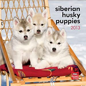 Siberian Husky Puppies 2013 7X7 Mini Wall Browntrout Publishers