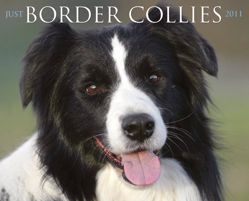 Wall 2010 Calendar Collie - Border Collies 2011 Wall Calendar