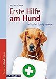 Erste Hilfe am Hund: Im Notfall richtig handeln