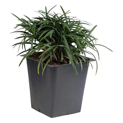 grass pots - 8