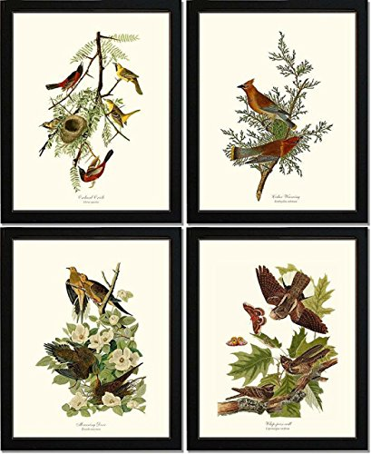 Bird Prints by James Audubon. Matched Set of 4 Vintage Wall Decor Reproductions. Artwork in 5x7 8x10 11x14 Sizes.