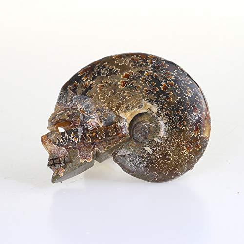 OCN-HEALING Ammonite Fossils Specimen with Skulls 64521654.1g