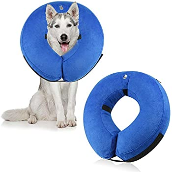 Amazoncom The Comfy Cone Pet Recovery Collar By All Four Paws - Dog portrait photography shows how they hate wearing the cone of shame