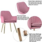 GOLDEN BEACH Velvet Dinning Chair Set of 2 Mid-Back Accent Chair Modern Leisure Armchair with Gold Plating Legs Upholstered Living Room Chair