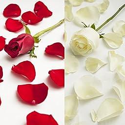 Farm Fresh Natural White - Red Rose Petals - 3000 petals