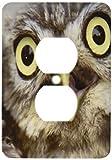 3dRose LLC lsp_9927_6 Little Owl, Athena Noctua, Aragon Spain Europe 2 Plug Outlet Cover