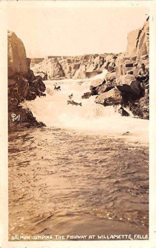 Salmon Jumping the Fishway Willamette Falls, Oregon postcard