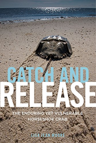 (Catch and Release: The Enduring Yet Vulnerable Horseshoe Crab)